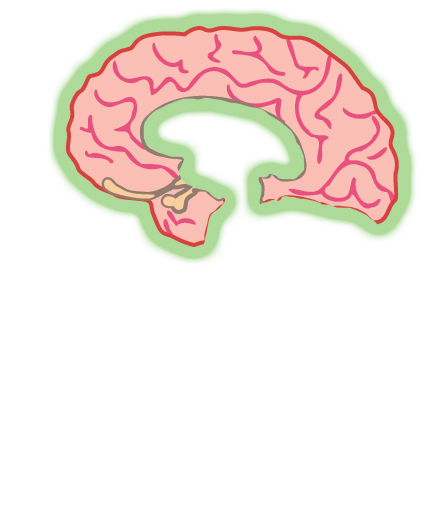 Brain Quiz   Project NEURON   University of Illinois